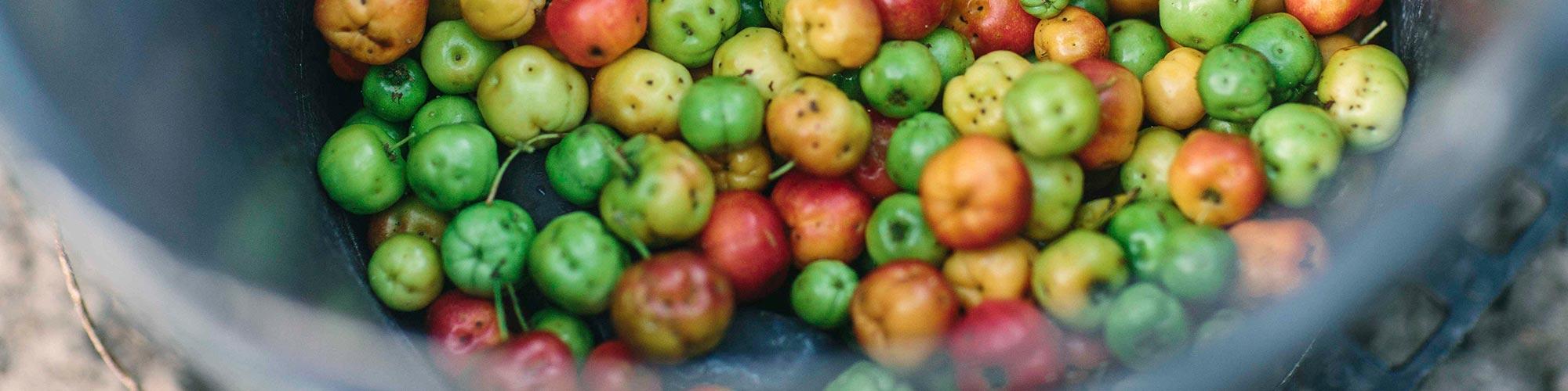 NUTRIWAY Organic Farms